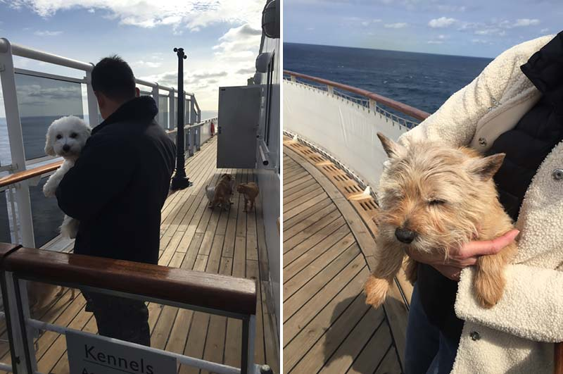 Hondenkennel op de Queen Mary 2 van Cunard