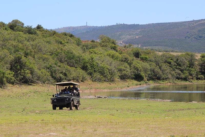 Pumba Private Game Reserve, Zuid--Afrika vanuit Port Elizabeth
