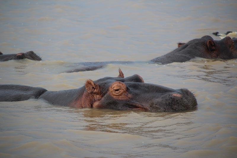 Isimangaliso Wetland Park, St. Lucia Estuary, Zuid-Afrika vanuit Richards Bay
