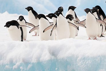 antarctica_pinguins3