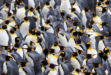 antarctica_pinguins2