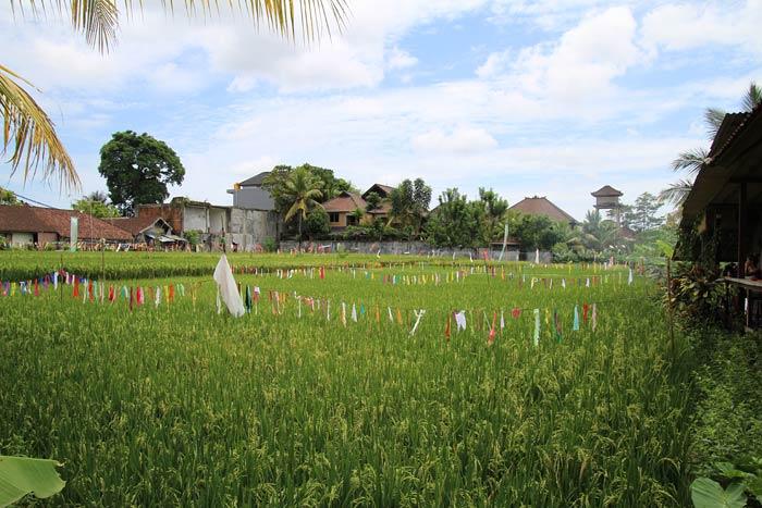fotos van een dag in ubud bali
