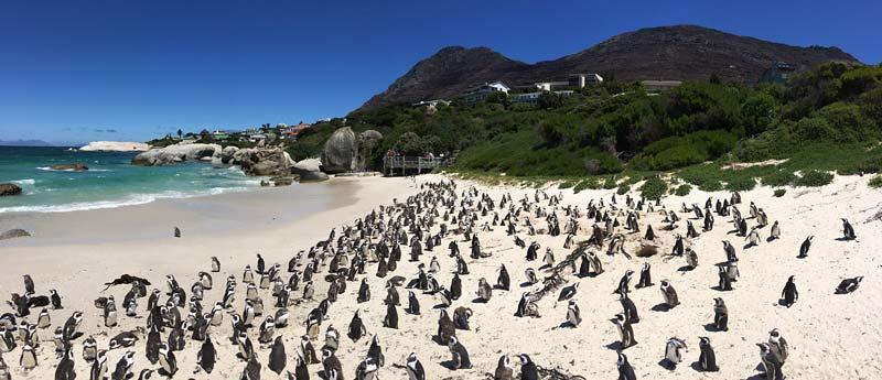 Pinguïns, bavianen en Kaap de Goede Hoop: op excursie vanuit Kaapstad